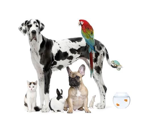 http://bric-a-brac2.e-monsite.com/medias/images/animaux-domestiques-id5471-1.jpg
